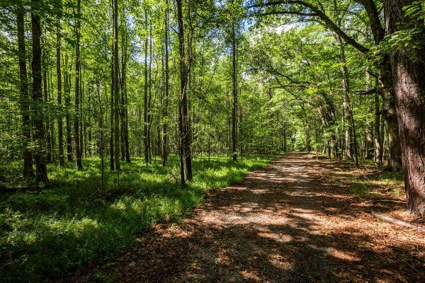 Woods-and-Trails-Header