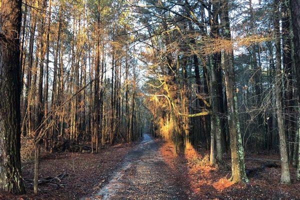woods_winter